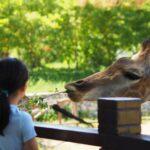 Quelle école choisir pour devenir soigneur animalier ?